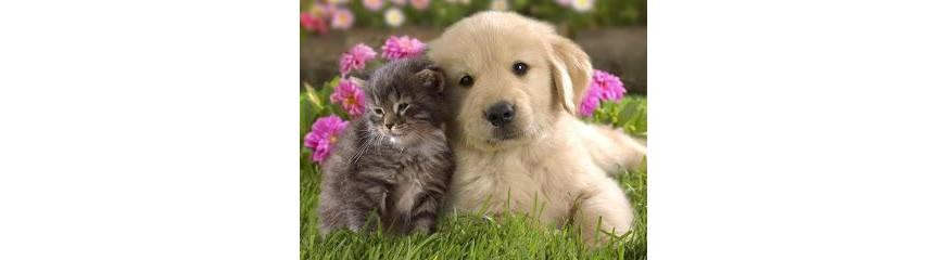 מזון פרימיום לחתולים וכלבים